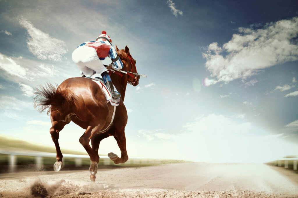 Las enfermedades más frecuentes en los caballos de competición