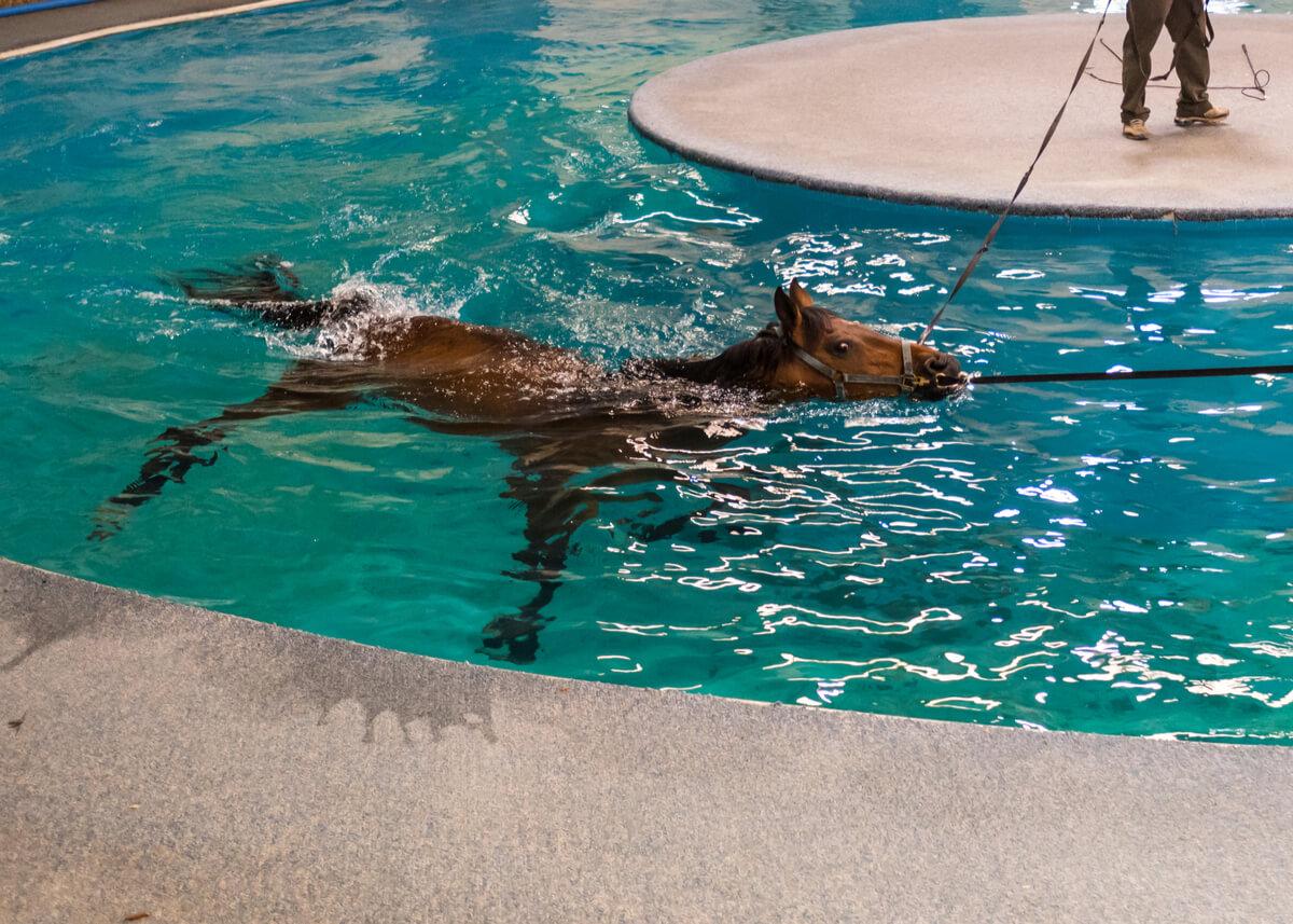 Un caballo en una piscina.