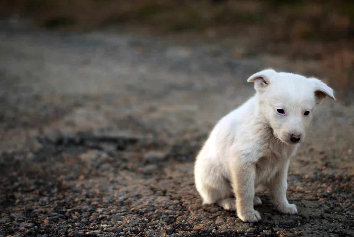 Un cachorro abandonado en la calle.