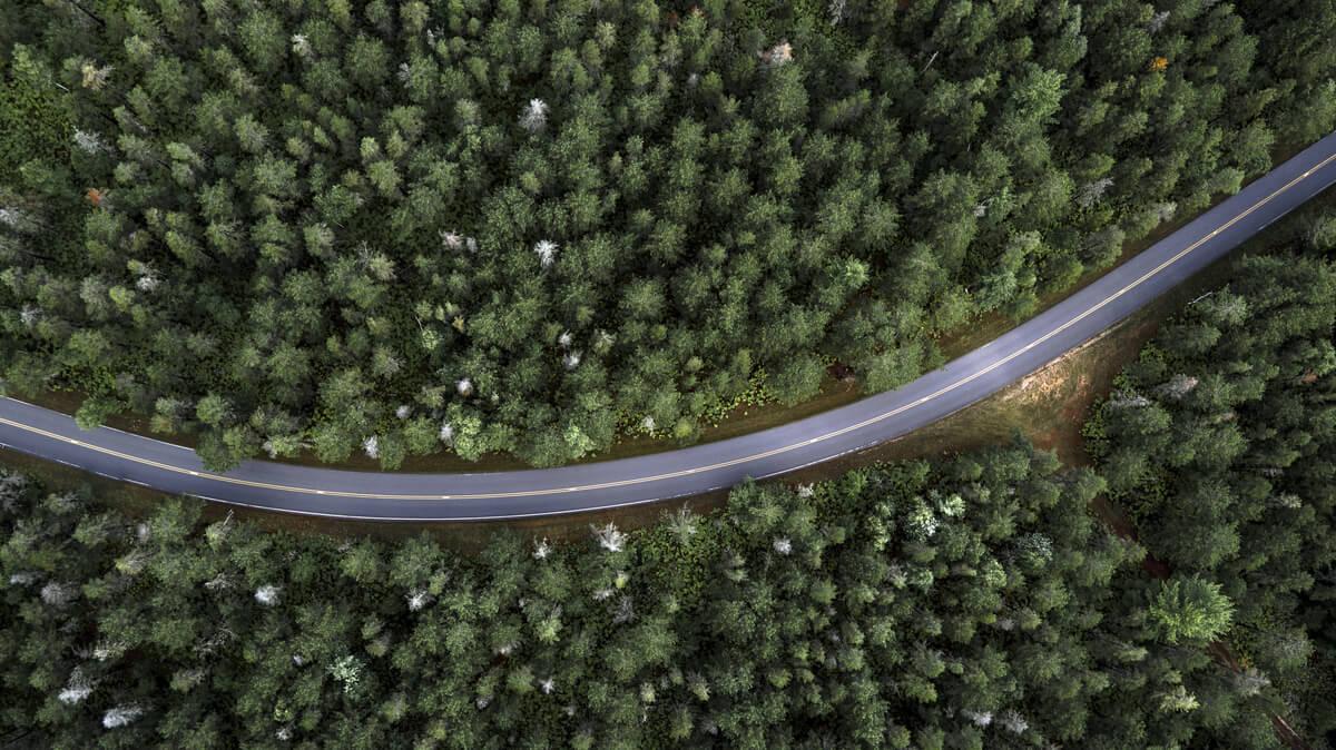 Los problemas de la fragmentación de hábitats