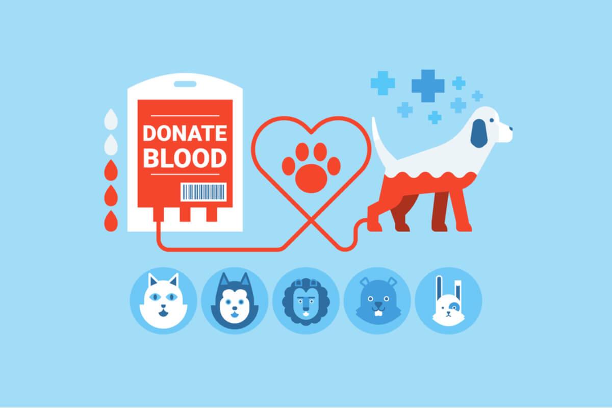 La transfusión de sangre en mascotas puede salvar vidas.