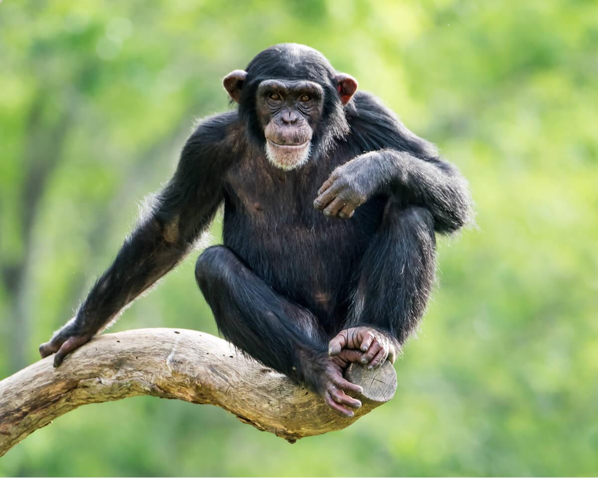 Comunicación en primates.
