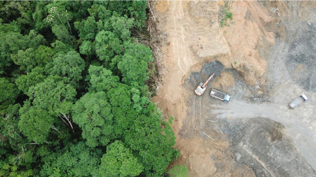 ¿Cómo afecta la deforestación a la biodiversidad?