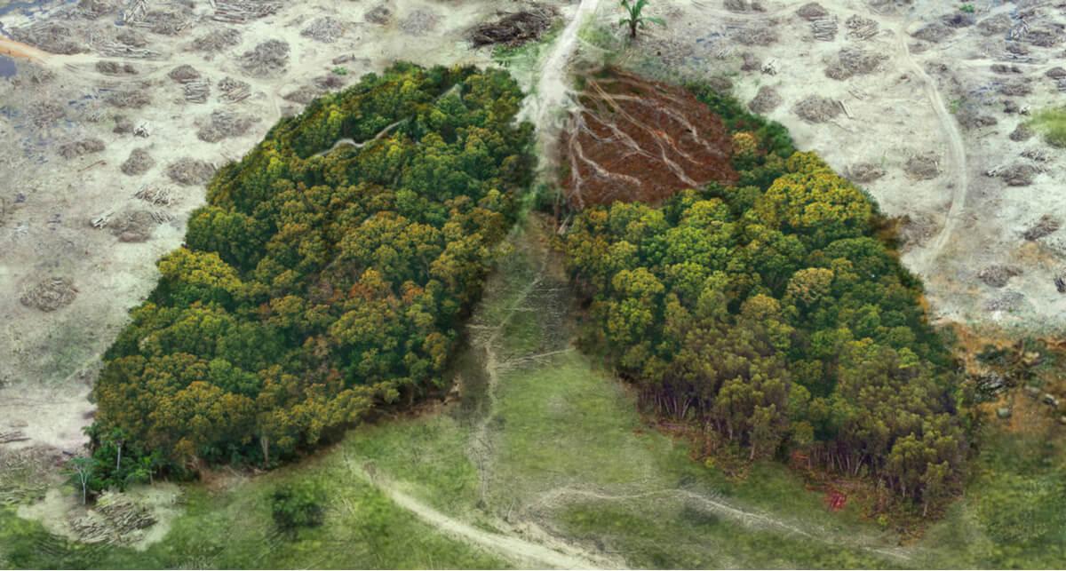 Las selvas son el pulmón de la tierra.