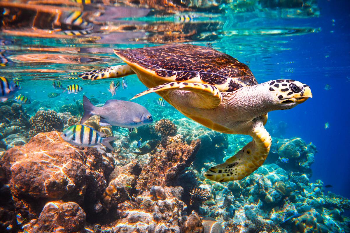 En sköldpadda i vatten