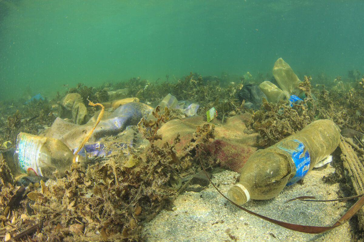 Contaminación y vida marina.