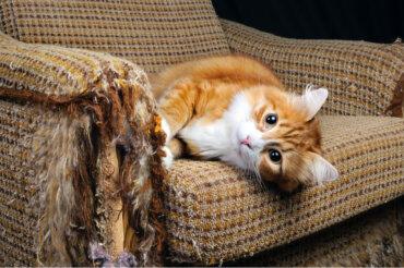 Razones por las que los gatos arañan los muebles