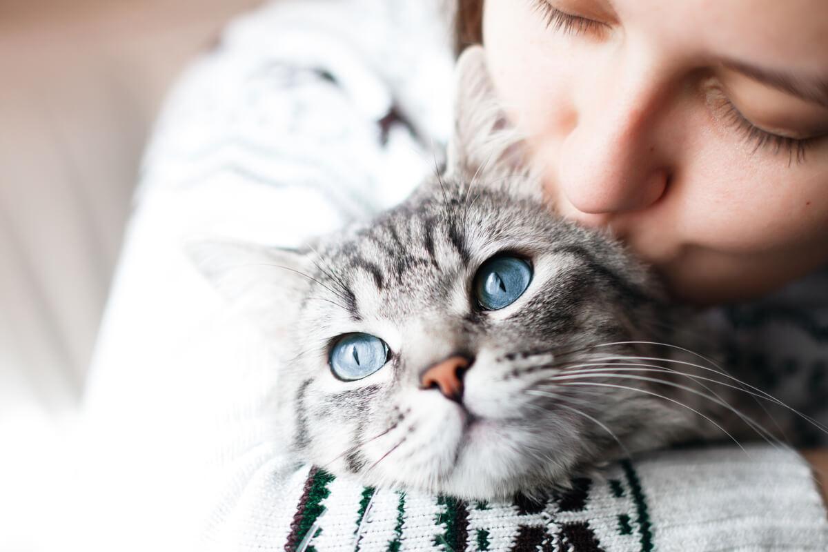 La interacción social en gatos puede ser difícil de entender.