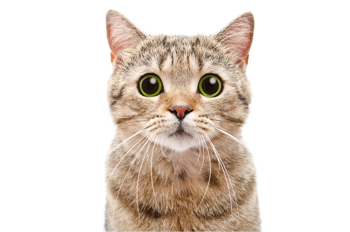 Un gato mirando a cámara.