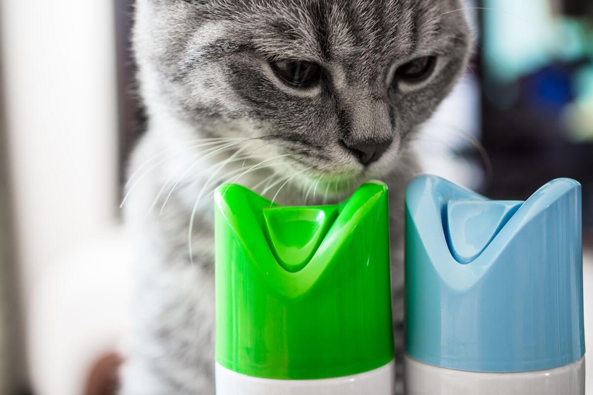 Algunos productos del hogar pueden ser dañinos para la mascota.