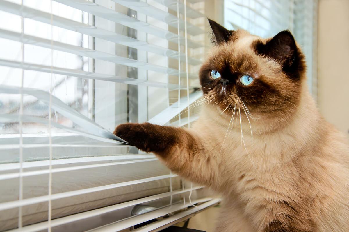 Un gato mirando por la ventana.
