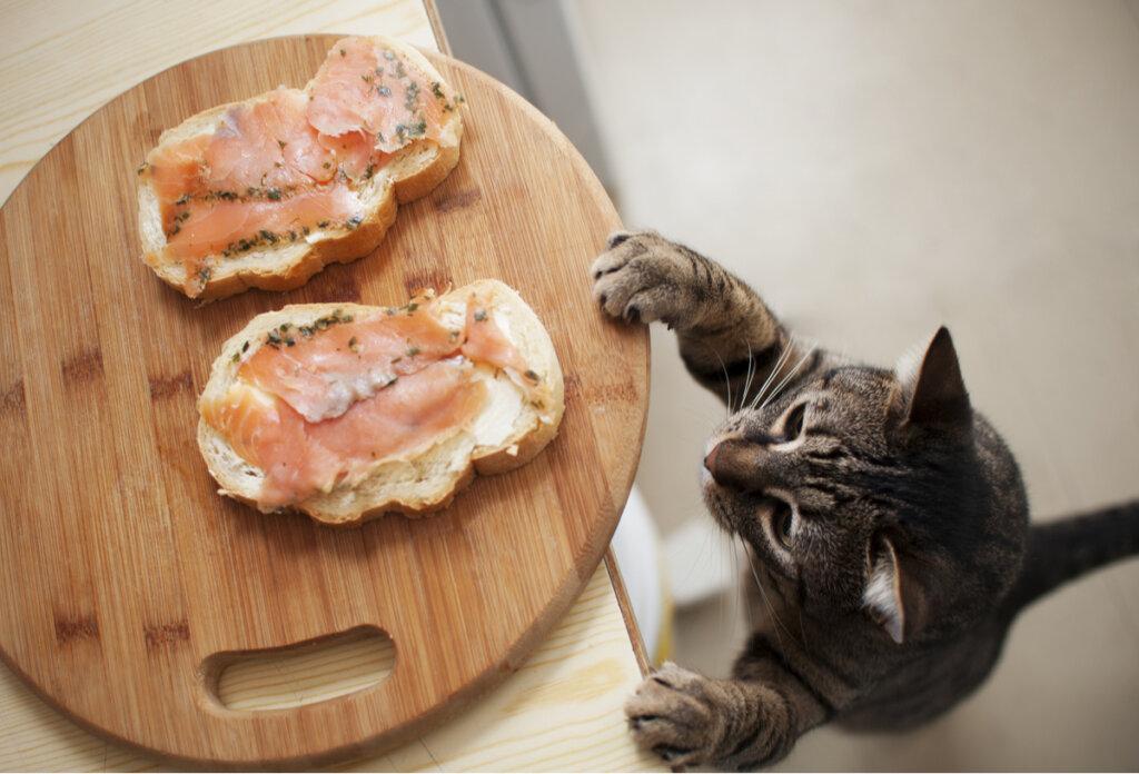 Fuentes de antioxidantes para gatos