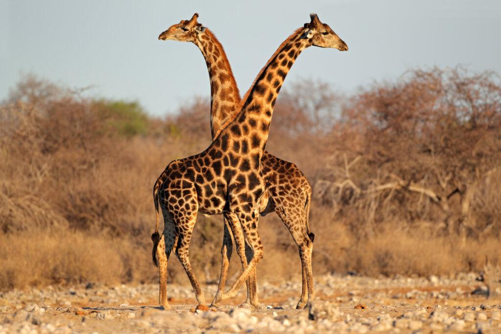 El lenguaje corporal en mamíferos: consejos para entenderlo
