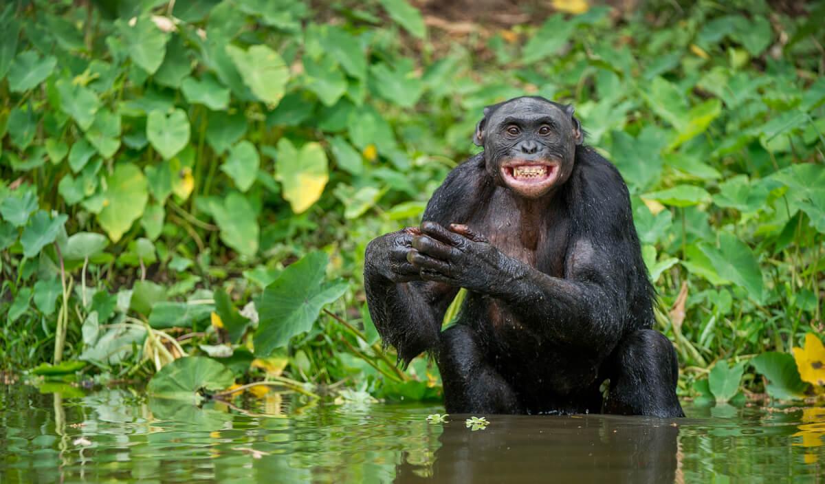 Lenguaje corporal en mamíferos.