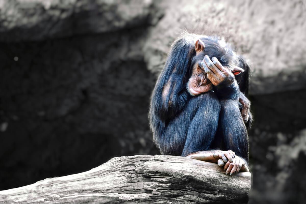 ¿Existe el suicidio en el reino animal?