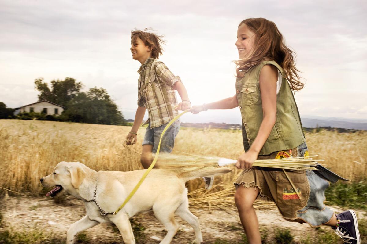 los perros siguen a sus tutores.