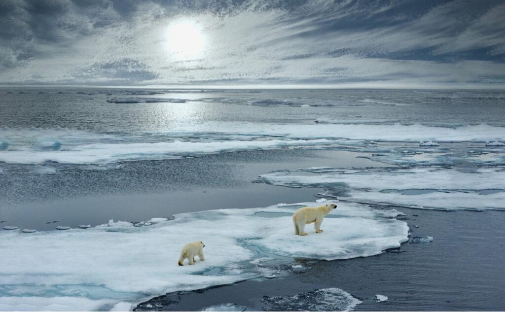Efectos del cambio climático sobre la fauna polar
