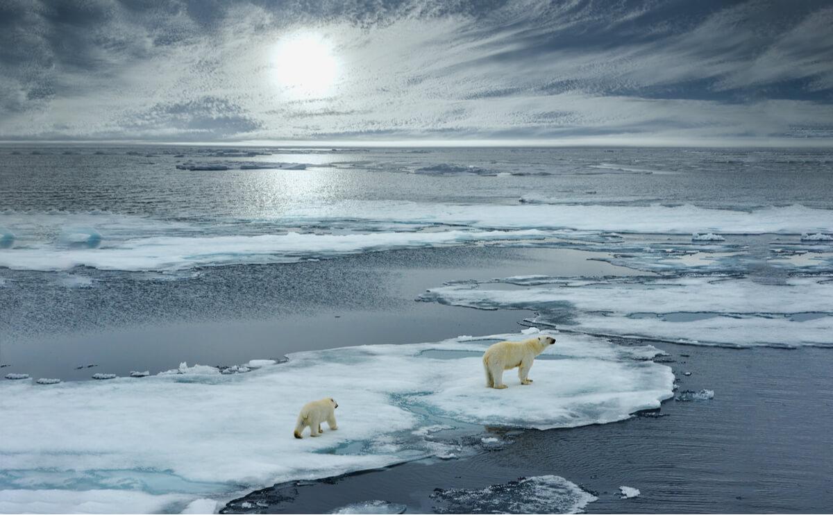 Isbjørnen er en av flere utrydningstruede dyr på Nordpolen