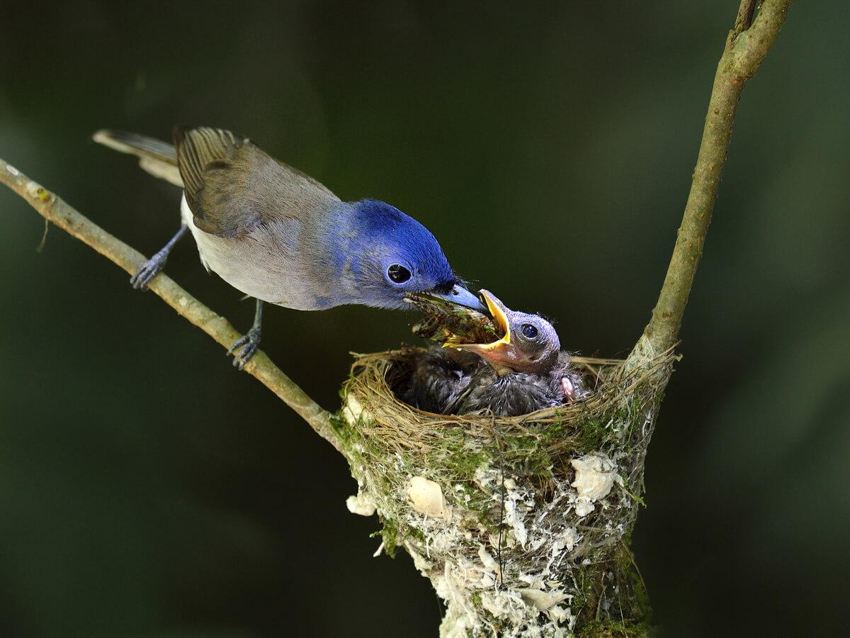 Un pájaro alimentando a sus crías.