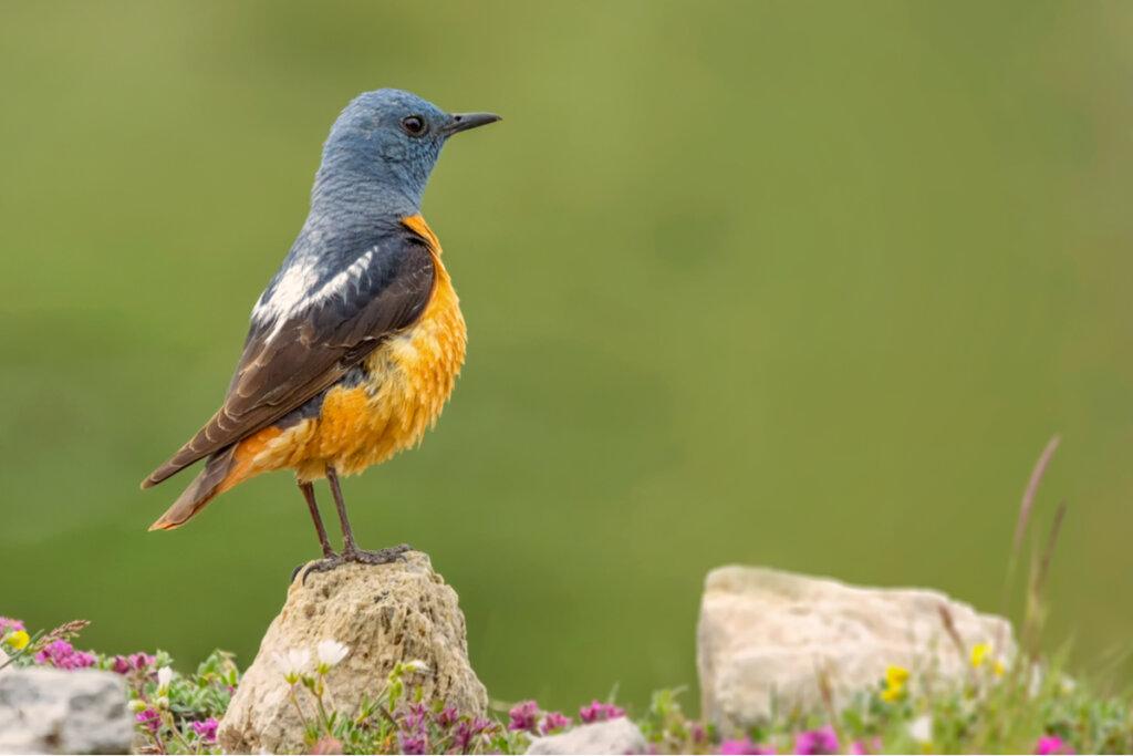 La fauna del Parque Nacional de Guadarrama