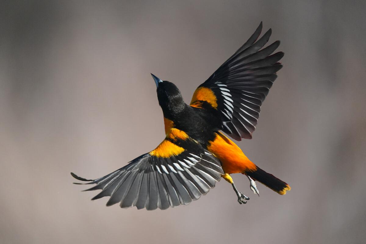 ¿Por qué vuelan las aves?