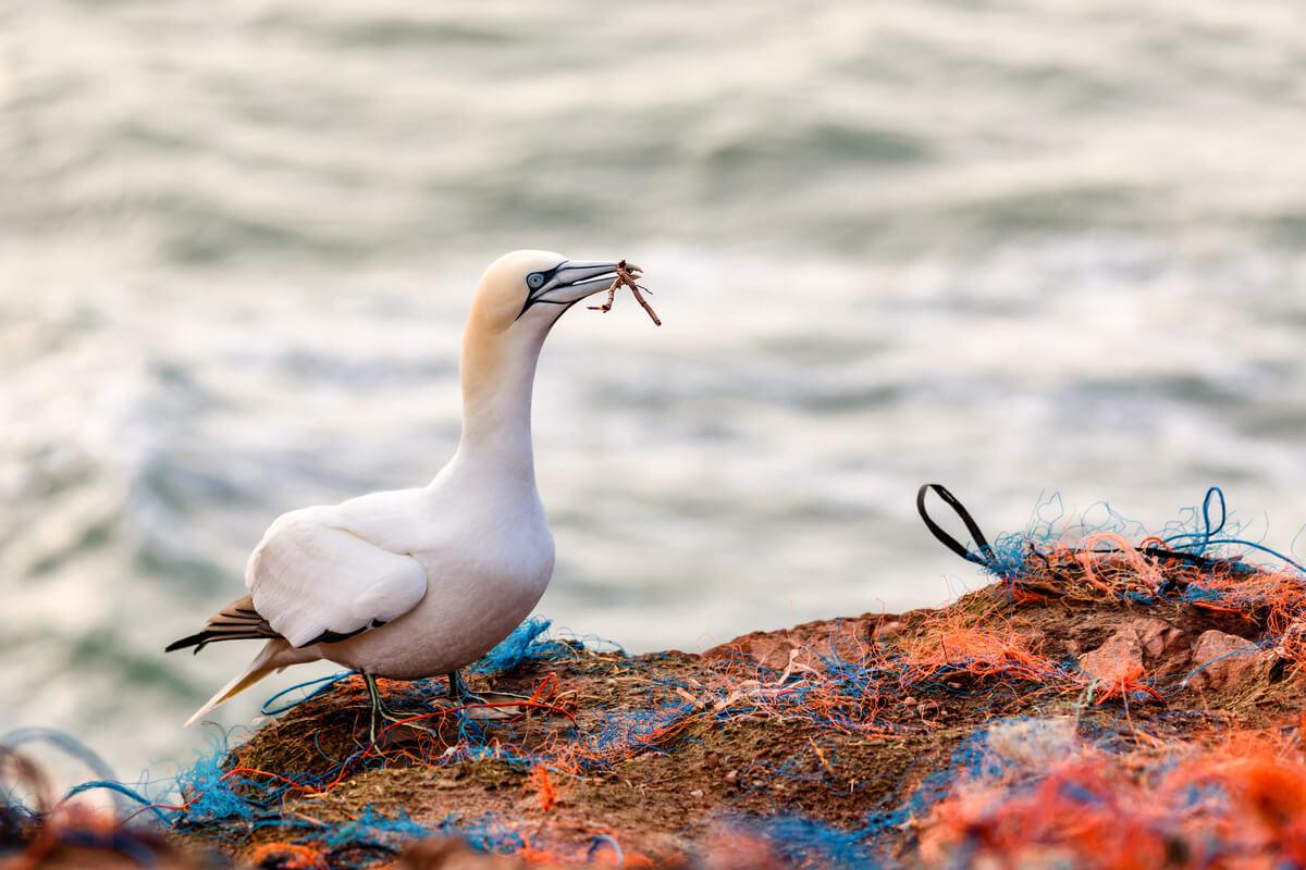 Los efectos de los plásticos sobre la vida marina son incontables.