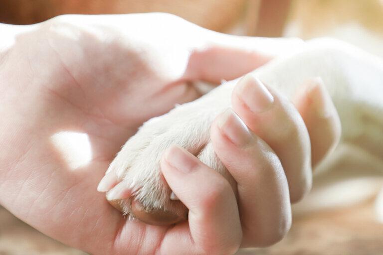 Afrontar la pérdida de una mascota: ¿qué dice la ciencia?