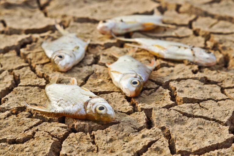Efectos de la sequía en animales acuáticos