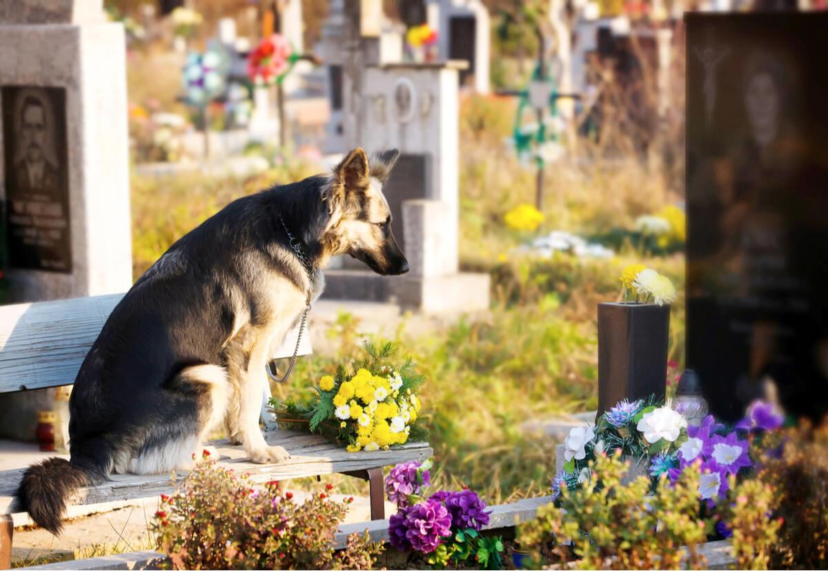 Un perro triste en un cementerio.