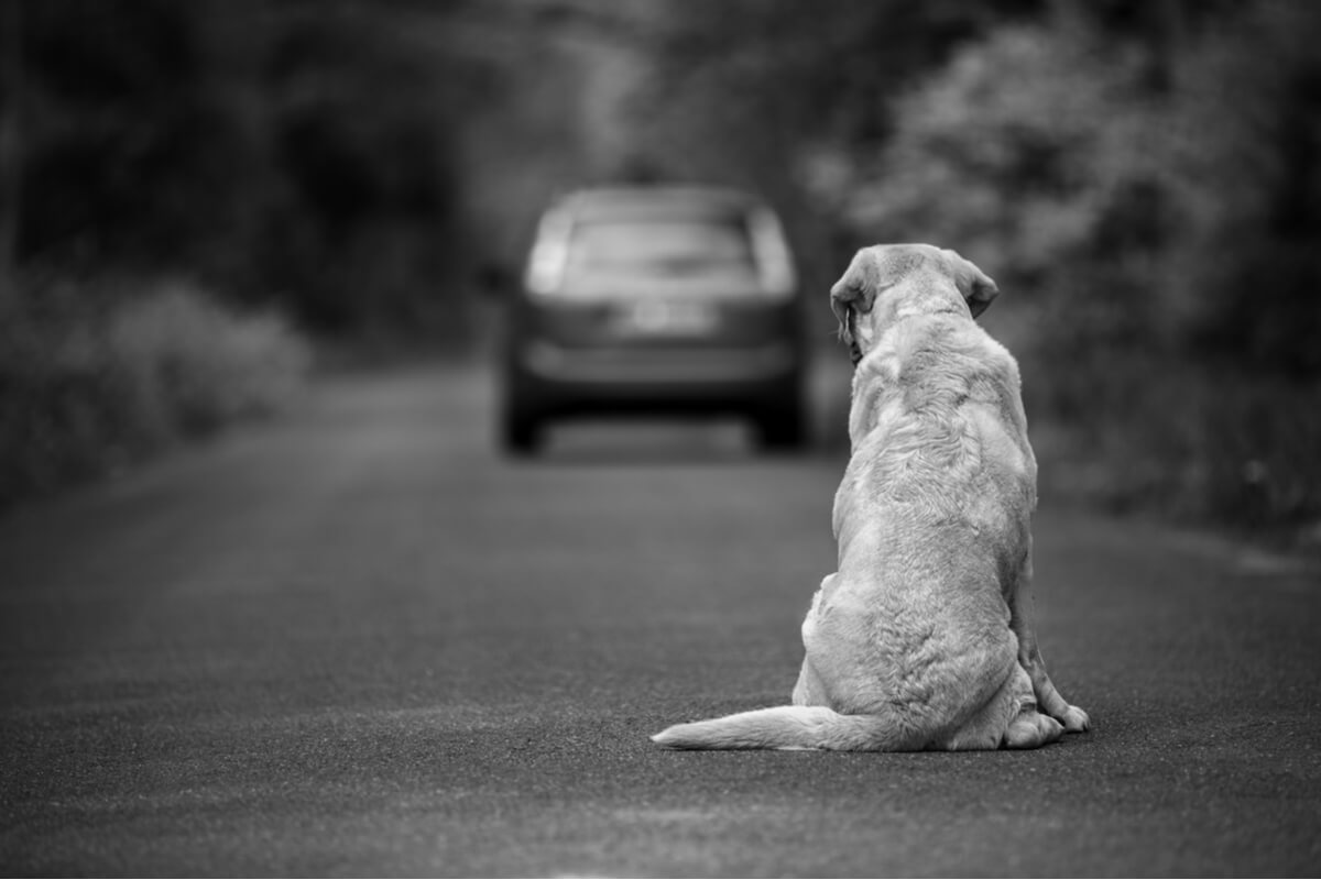 Leyes que castigan el abandono de animales