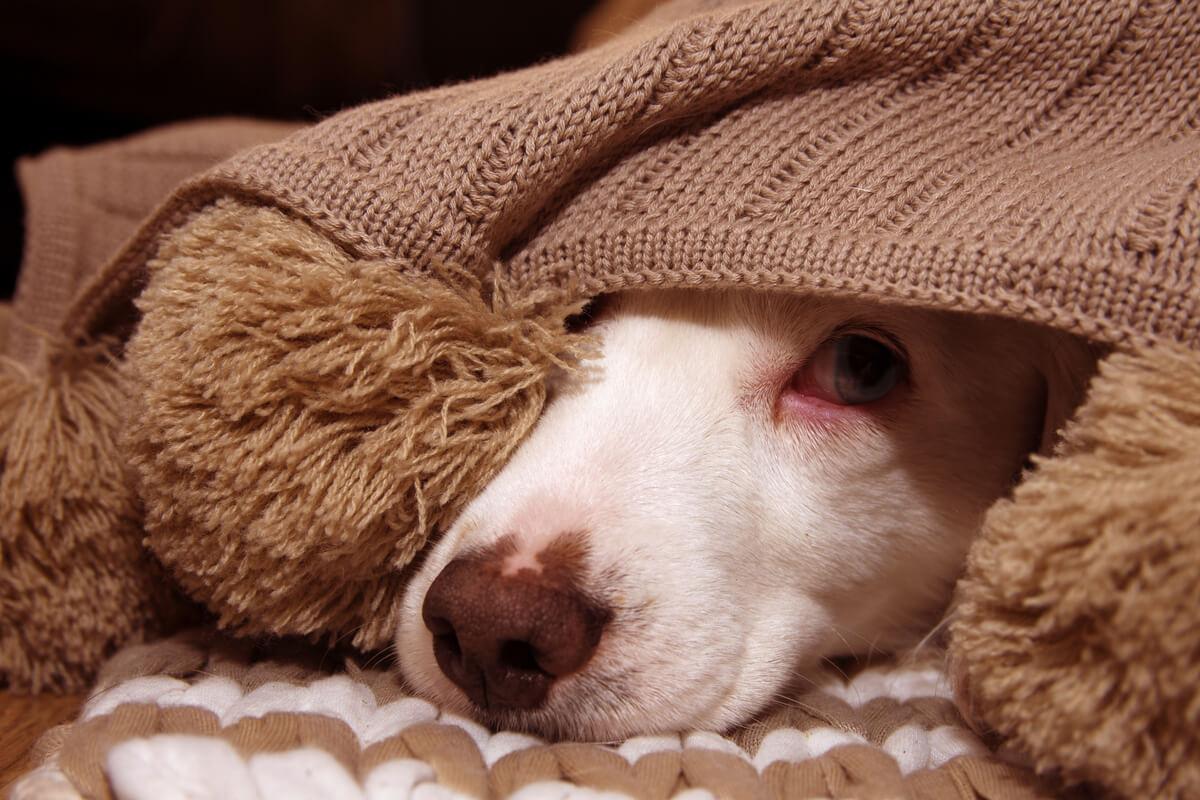 ¿Por qué se producen las autolesiones en perros?
