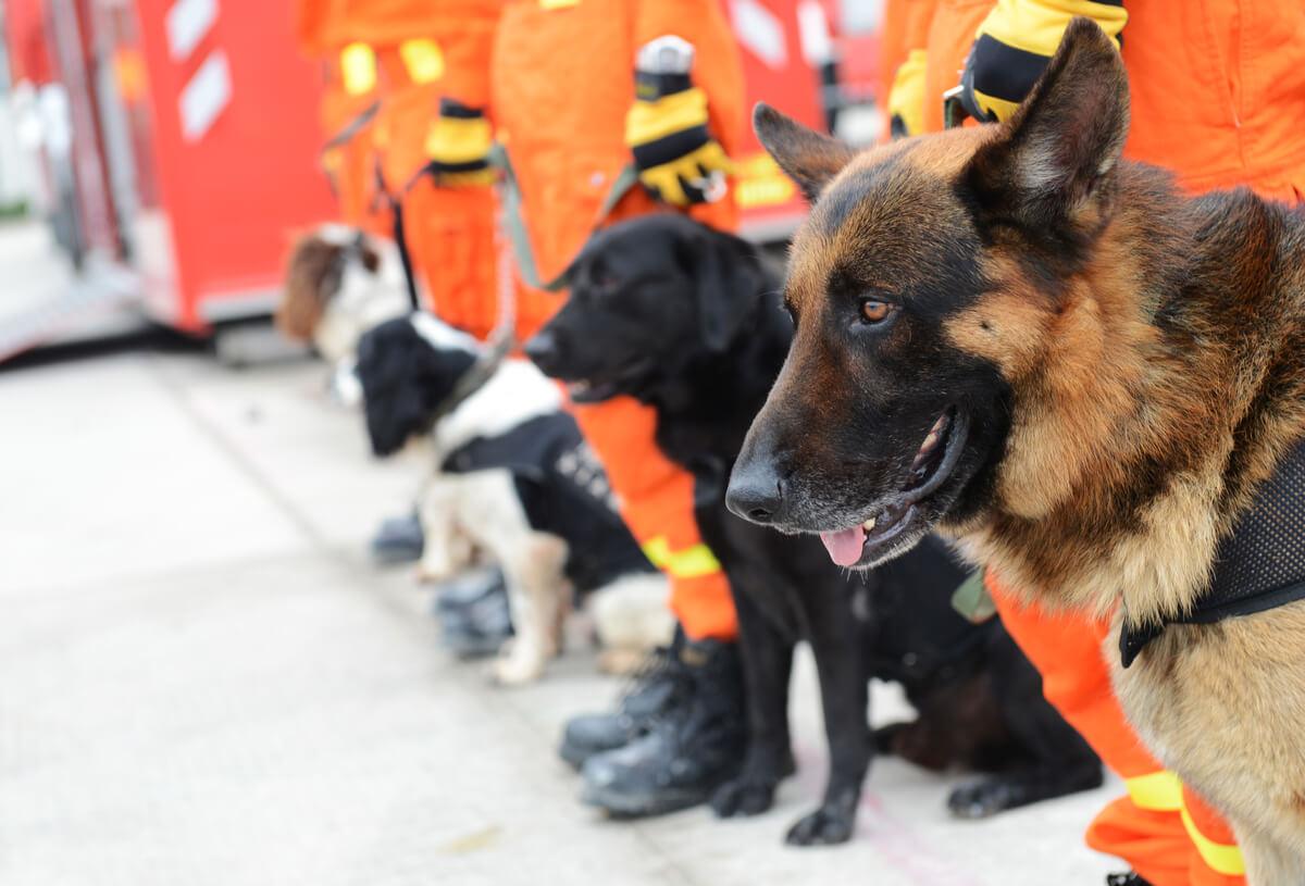 Un perro de búsqueda y rescate.