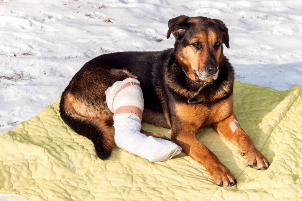 Cómo cuidar a una mascota después de una cirugía