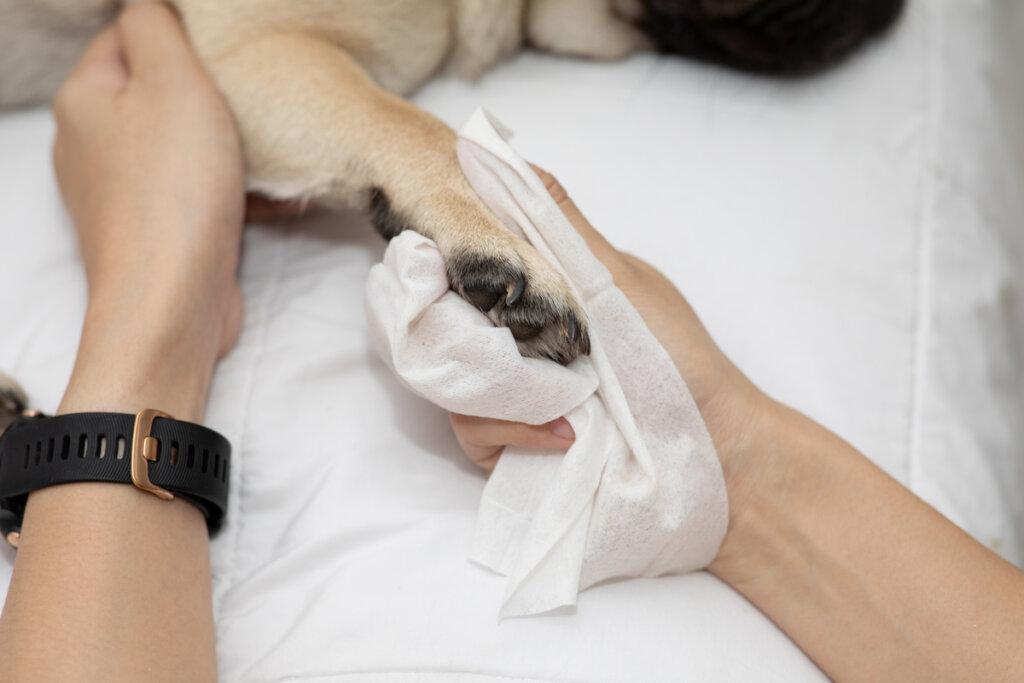 Cojera en perros: ¿cómo tratarla?