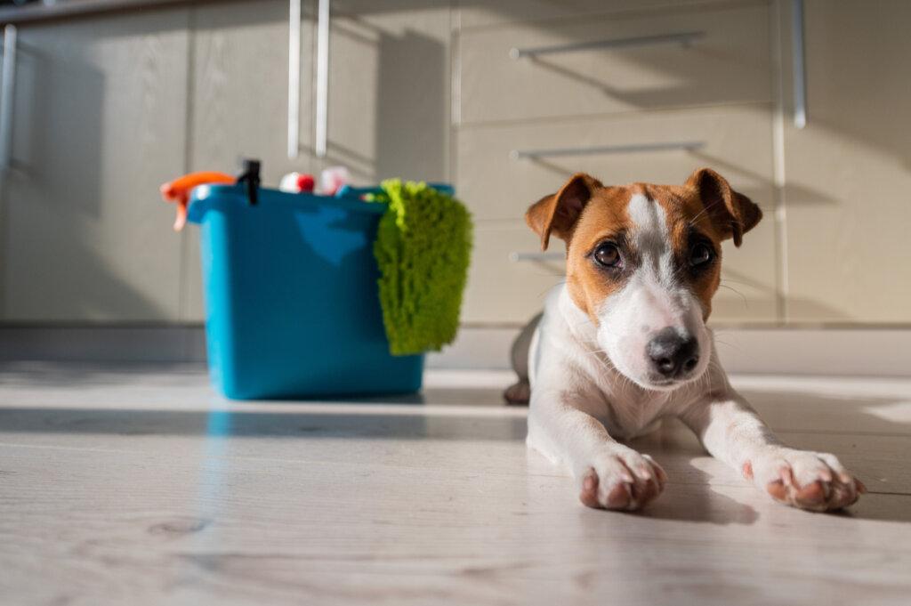 Productos del hogar que pueden ser dañinos para las mascotas