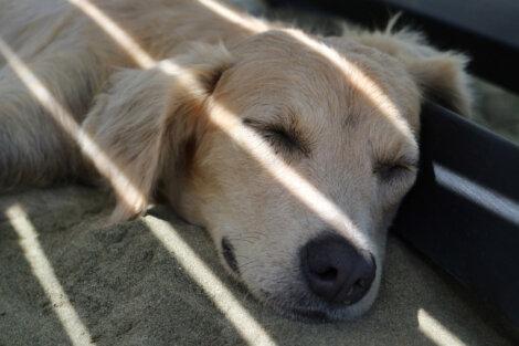 Un perro descansando bajo una mesa.