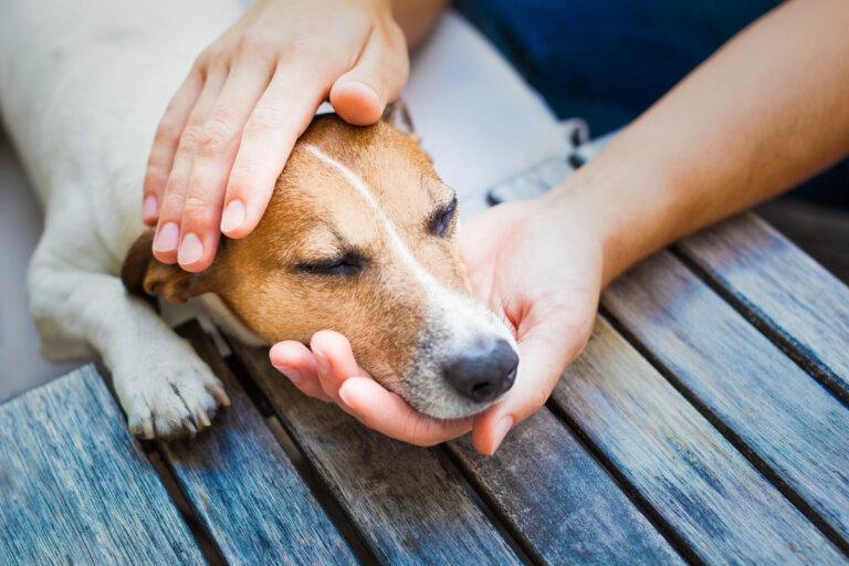 8 consejos para tratar los resfriados en perros