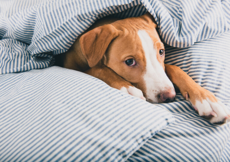 16 síntomas de enfermedad en perros