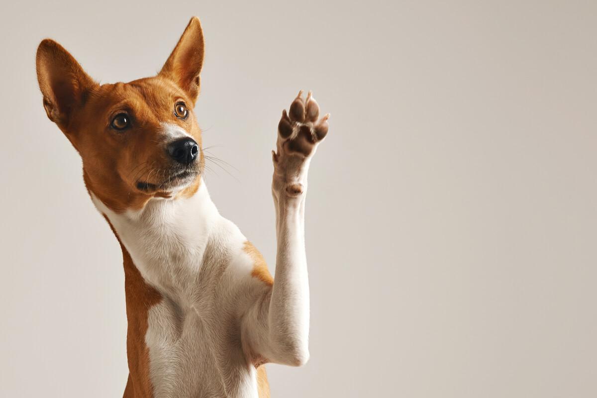Los animales digitígrados son aquellos que se apoyan sobre sus dedos.
