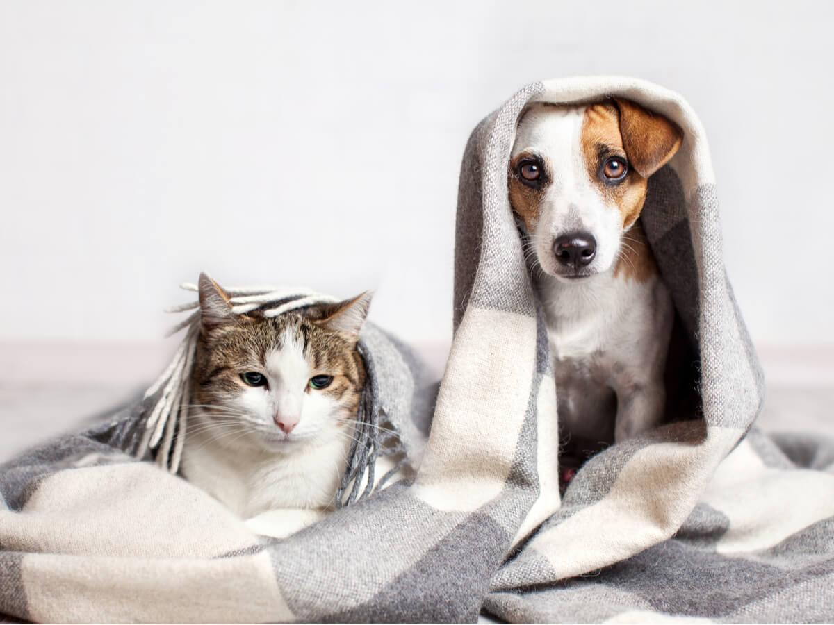 el moquillo en perros y gatos es una enfermedad severa.
