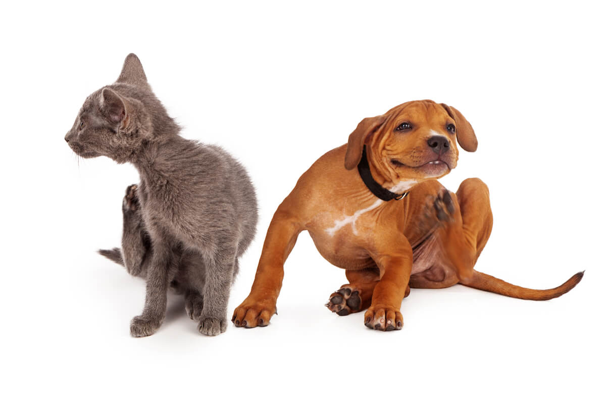 Un perro y un gato rascándose.