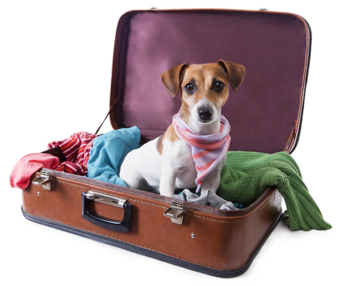 Hay perros que no pueden viajar en avión.