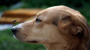 ¿Cómo tratar las picaduras en perros?