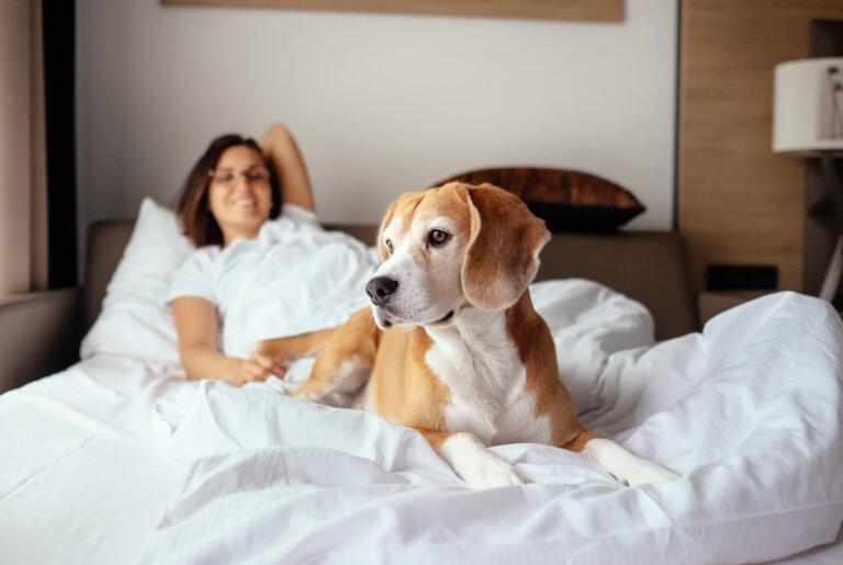 Legalidad en vacaciones con un perro en hoteles