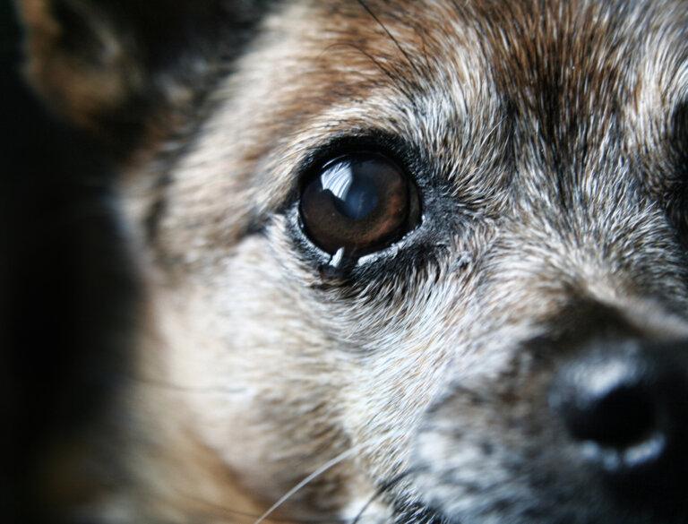 ¿Por qué mi perro no para de llorar?