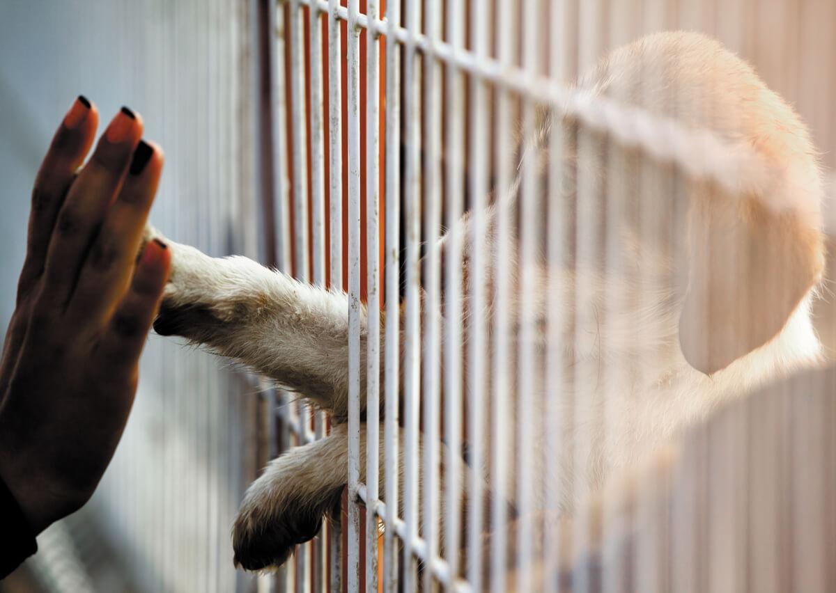 El abandono de animales está penado por la ley.