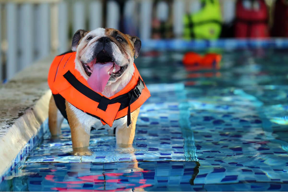Un perro en una piscina usa flotador.