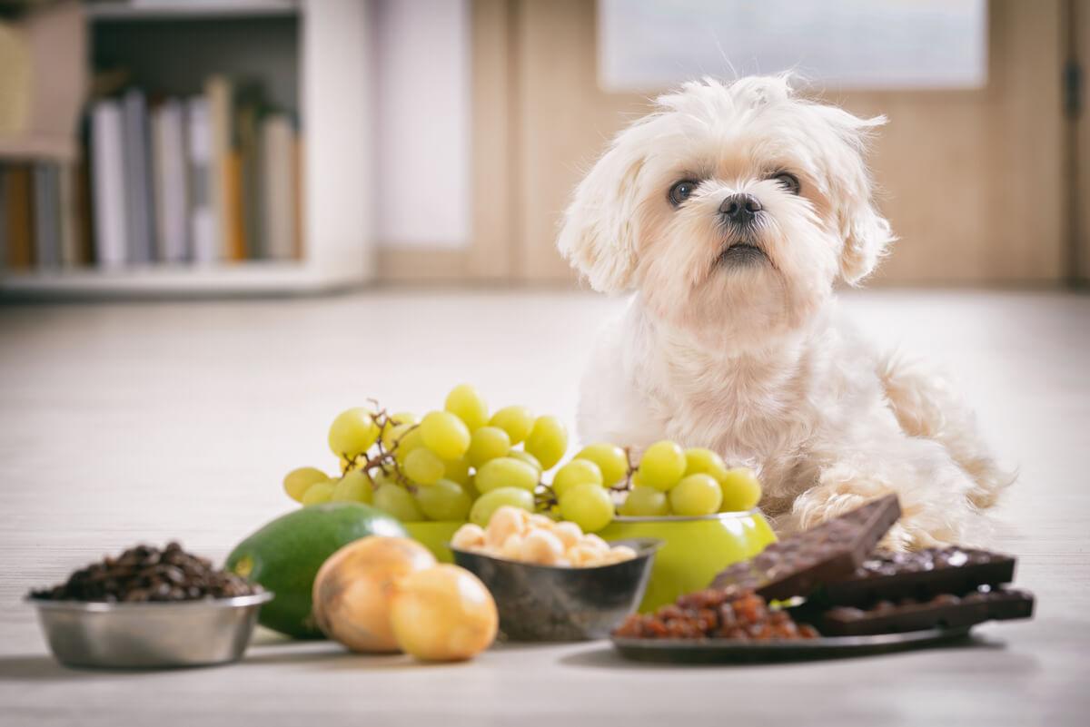 Controlar el peso de tu mascota es esencial para su salud.
