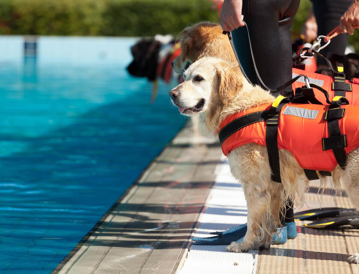 Un perro de búsqueda y rescate en una piscina.