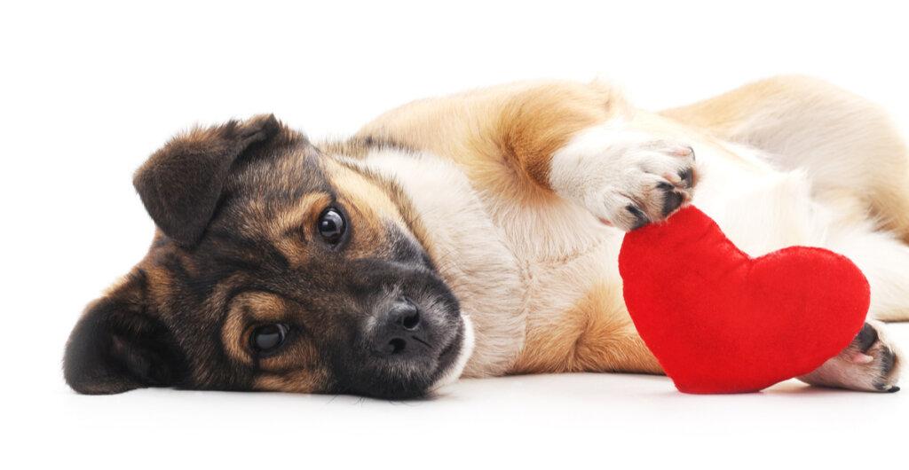 Autolesiones en perros: ¿por qué suceden?